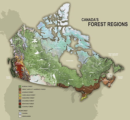 Canada Forest Regions